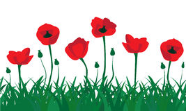 Seamless pattern of red poppies. And the green grass Royalty Free Stock Photo