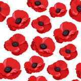 Seamless pattern with red poppies. Stock Image