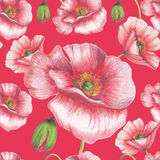 Seamless pattern of red poppies Stock Images
