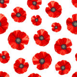 Seamless pattern with red poppies. Vector illustration. Royalty Free Stock Images