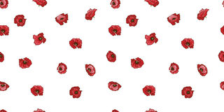 Seamless pattern with red poppy flowers isolated on white background. Vector illustration. Seamless pattern with red poppy flowers isolated on white background Royalty Free Stock Photos