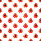 Seamless pattern with red poppy flowers on white background. Stock Photography