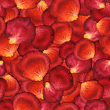 Seamless pattern of red rose petals. Watercolor seamless pattern of red rose petals, hand painted watercolor illustration, design for fabric, textile, wrapping Stock Image