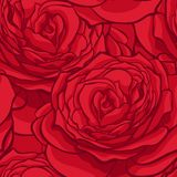 Seamless pattern in red roses with contours. Hand-drawn contour lines and strokes. Perfect for background greeting cards and invit Royalty Free Stock Photography