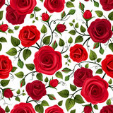 Seamless pattern with red roses. Vector illustration. Stock Photos