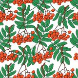 Seamless pattern with red rowan berries and leaves. Hand drawn seamless pattern with red rowan, ash tree berries and green leaves, sketch vector illustration on Stock Images