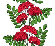Seamless pattern Red Rowan Tree. Endless ornament twig of rowanberry or ashberry. Background leaves and cluster of sorbus berry. B. Runch of sorb stock images
