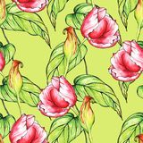 Seamless pattern with red tulips flowers on green background Royalty Free Stock Image