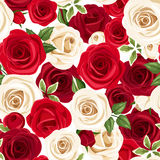 Seamless pattern with red and white roses. Vector illustration. Vector seamless pattern with red and white roses and green leaves Stock Photos