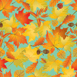 Seamless pattern with red and yellow autumn leaves. Fall season Royalty Free Stock Photos