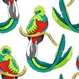 Seamless pattern resplendent quetzal bird male. vector illustra vector illustration