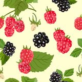 Seamless pattern with ripe raspberries and blackberries. Vector illustration. Vector seamless pattern with berries and raspberry and blackberry leaves on a Stock Photography