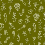 Seamless pattern - root vegetables Royalty Free Stock Photos