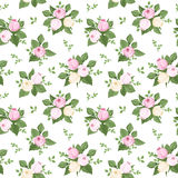 Seamless pattern with rose buds and leaves on whit Royalty Free Stock Photo
