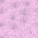 Seamless pattern with rose chrysanthemums. Endless texture for design. Vector background with chrysanthemums for your vector illustration