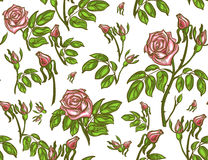Seamless pattern of rose. Colorful hand-drawn rose on white background. Stock Photography