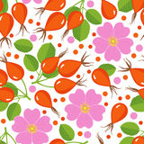 Seamless pattern with rose hip. Royalty Free Stock Image