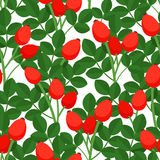 Seamless pattern with rosehig Stock Image