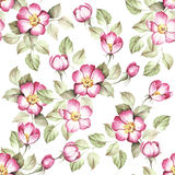Seamless pattern with rosehip. Hand draw watercolor illustration Royalty Free Stock Photos