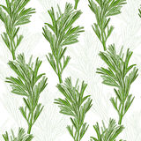 Seamless pattern with rosemary Stock Photography