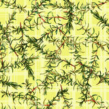 Seamless pattern rosemary. Royalty Free Stock Photo