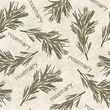 Seamless pattern with rosemary. Hand-drawn floral background. M Royalty Free Stock Photo
