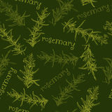 Seamless pattern with rosemary. Royalty Free Stock Photos