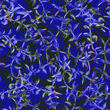 Seamless pattern rosemary. Stock Photos