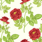 Seamless pattern with roses. Royalty Free Stock Photos