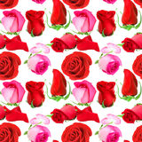 Seamless pattern of roses flowers Stock Photography
