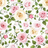 Seamless pattern with roses. Vector illustration. Stock Images
