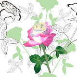 Seamless pattern with roses-03 Royalty Free Stock Photos