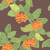 Seamless  pattern with rowan Stock Photography