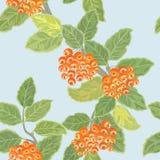 Seamless  pattern with rowan Stock Photos