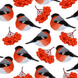 Seamless pattern with rowan and bullfinches. Seamless pattern with red rowan berries and bullfinches. Vector illustration on white background Vector Illustration