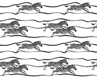 Seamless pattern with running zebras on white background. Royalty Free Stock Image
