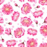 Seamless pattern with sakura or cherry blossom. Floral japanese ornament of blooming flowers Stock Photo