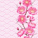 Seamless pattern with sakura or cherry blossom. Floral japanese ornament of blooming flowers Royalty Free Stock Photography