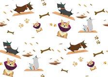 Pattern scottish/ terrier and corgi doing yoga/ Yoga poses. Seamless pattern/ scottish terrier and corgi doing yoga /Yoga poses with pet Stock Image