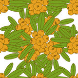 Seamless pattern of sea buckthorn. Stock Images