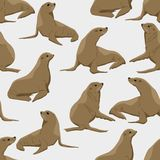 Seamless pattern. Seals in different poses on a monophonic background. Pinnipeds. vector illustration