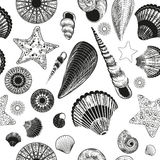 Seamless pattern with seashells (black and white) Stock Photos