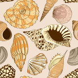 Seamless pattern of seashells Stock Photo