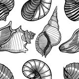 Seamless pattern of seashells. Royalty Free Stock Images