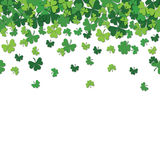 Seamless pattern with shamrock clover falling leaves  on white background. Royalty Free Stock Photography