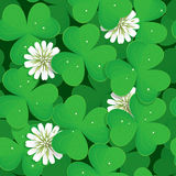 Seamless pattern with shamrock Stock Photos