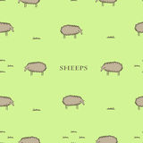 Seamless pattern with the sheeps. Vector seamless pattern with the sheeps and grass Royalty Free Stock Images