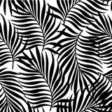 Seamless pattern with silhouettes of palm tree leaves in black on white background. Stock Photography