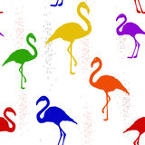 Seamless pattern with six-colored rainbow Flamingo Royalty Free Stock Image