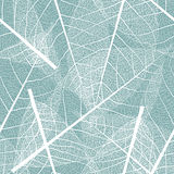 Seamless pattern with skeleton of leaves Royalty Free Stock Photos